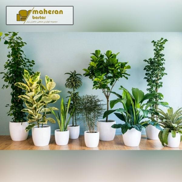 گیاهان آپارتمانی مدرن
